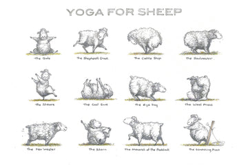 Yoga for Sheep