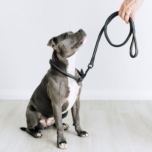 The Great Dog Lead Kit