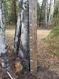watch us growth growth chart. made in spruce grove, alberta