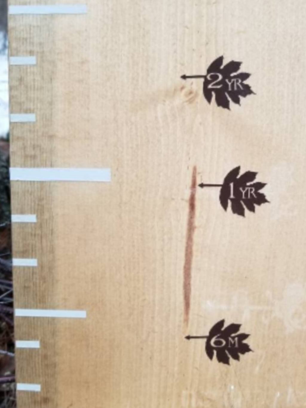 Leaf Height Marking Arrows - Little Prairie Craft Co.