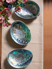 Abalone Shell Craft Soap Holders (Set of 3)
