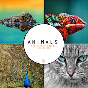 Animals - Camera Raw