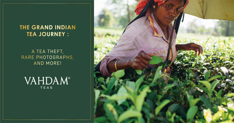 THE GRAND INDIAN TEA JOURNEY :           A Tea Theft, Rare Photographs, and More!
