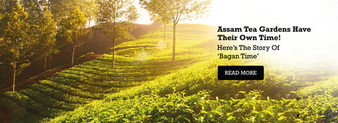 Assam Tea Gardens Have Their Own Time! Here's The Story Of 'Bagan Time'