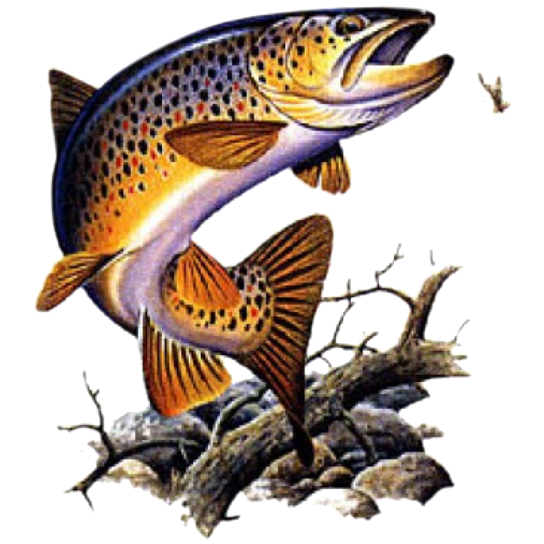 Brown Trout Printed T-Shirt Tall