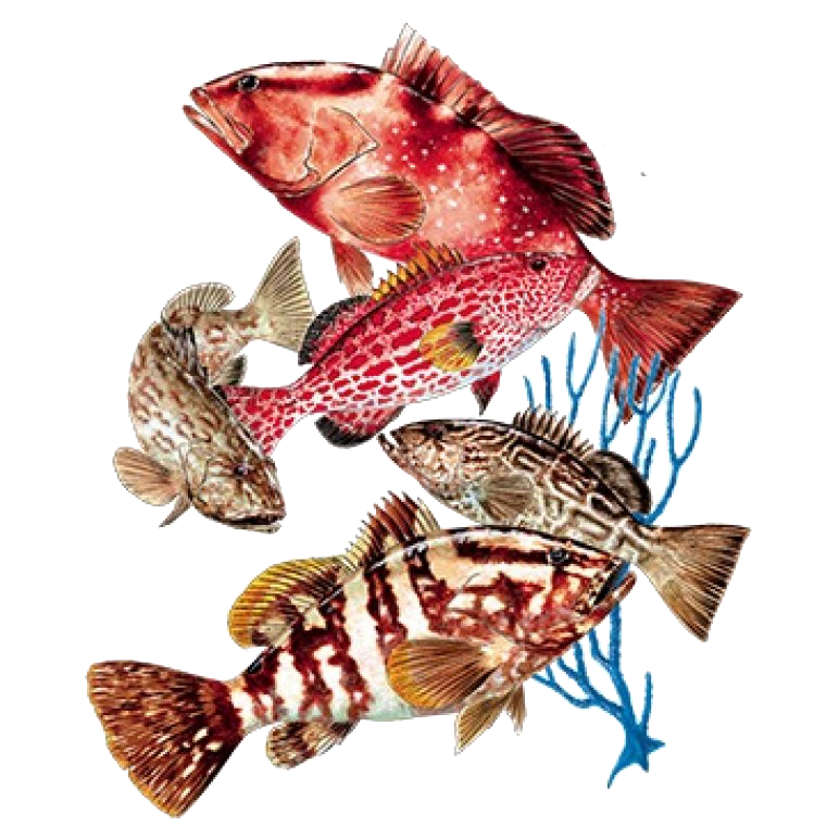 Groupers Printed T-Shirt