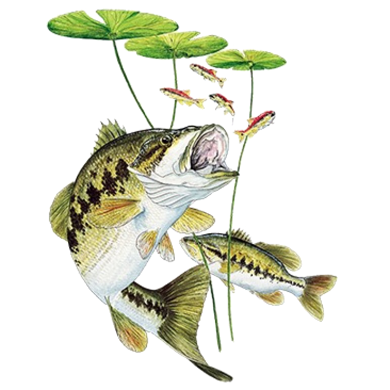Bass Under Lily Pad Printed T-Shirt Tall