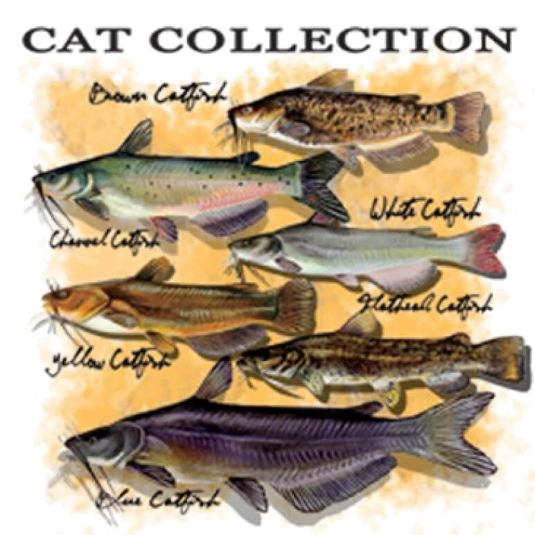 Catfish Collection Printed T-Shirt