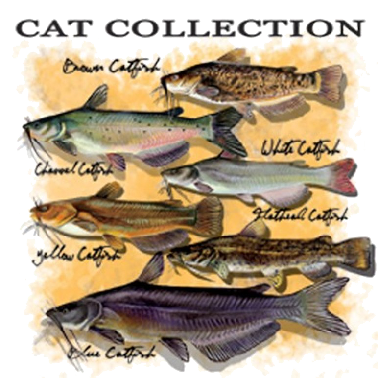 Catfish Collection Printed T-Shirt Tall