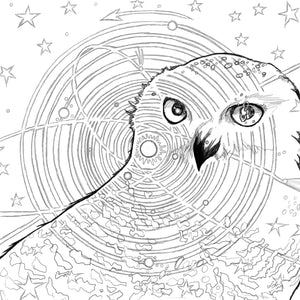 Snowy Owl Coloring Book