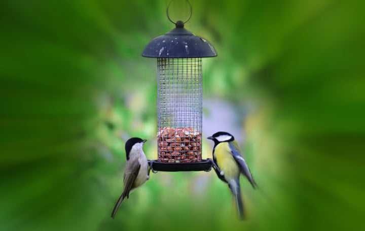 Tips for celebrating Bird Feeding Month and for installing your own bird feeders
