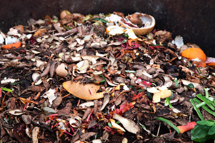 Learn About Composting Day 2019