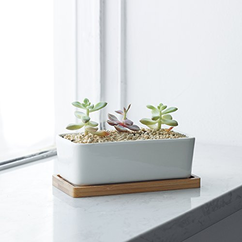6 White Ceramic Flower Pots With Drainage Holes And Bamboo Trays