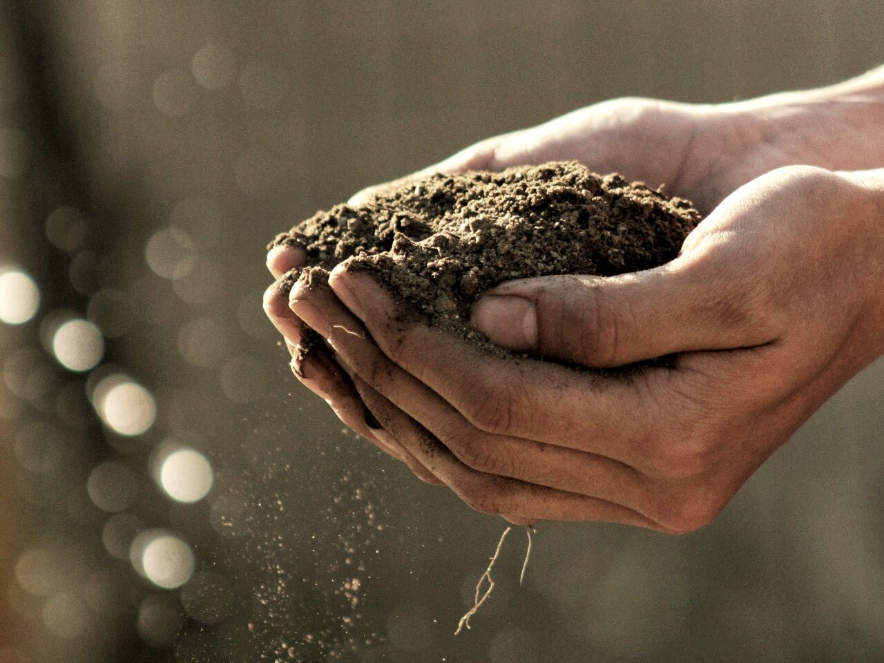 Hands holding a pile of dirt to show soil-based probiotics