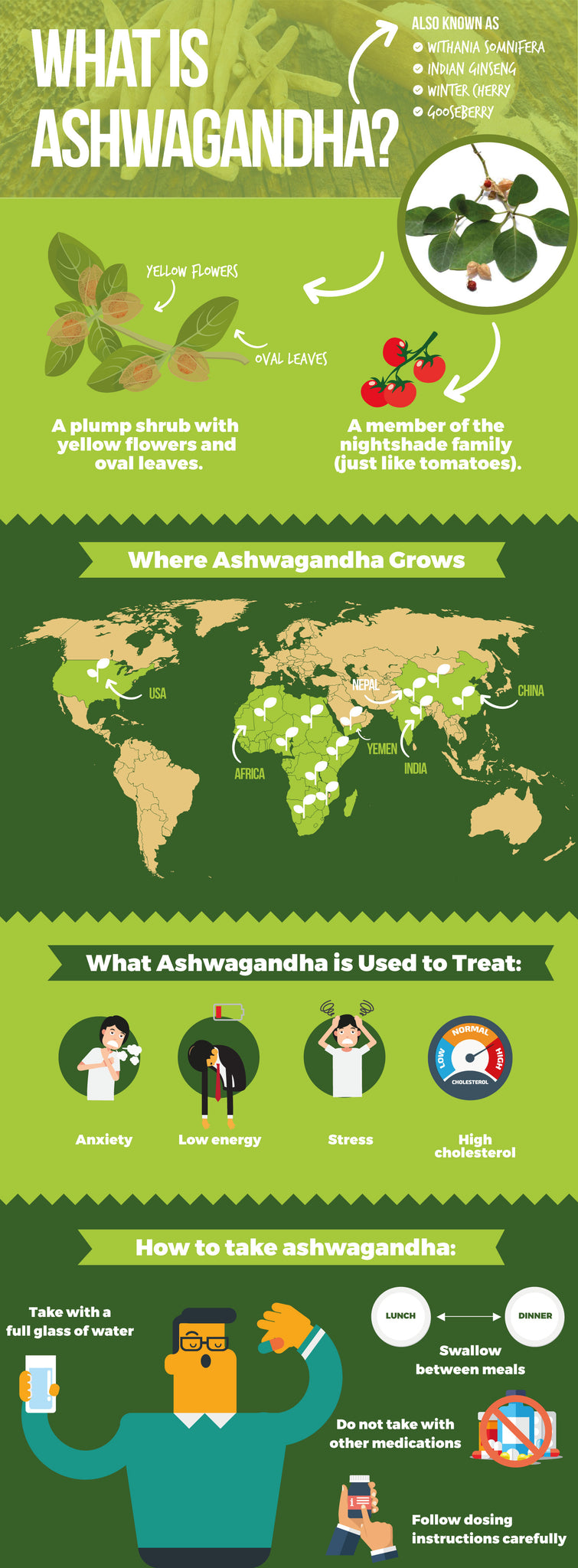 Ashwagandha benefits everyone: Your guide to this amazing