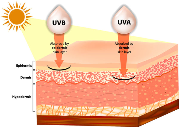 Infographic showing how UVA and UVB sun rays penetrate the dermis