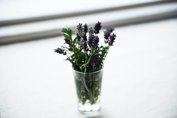 Lavender in a cup on a windowsill