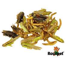 Rodipet® Insect Mix Protein Snack 50g