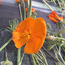 California Poppy herb, dried bulk Eschscholzia californica organic