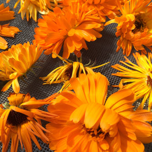 Calendula infused oil, Calendula officinalis organic flowers