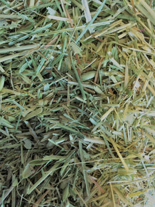 Oat Straw, dried Avena sativa organic