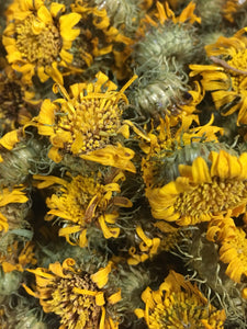 Gumweed tincture, dried Grindelia flower extract USA sustainably grown