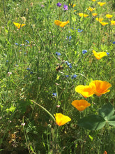 Easy Sleep, Herbal Tincture Blend to promote restful sleep with Valerian & California Poppy