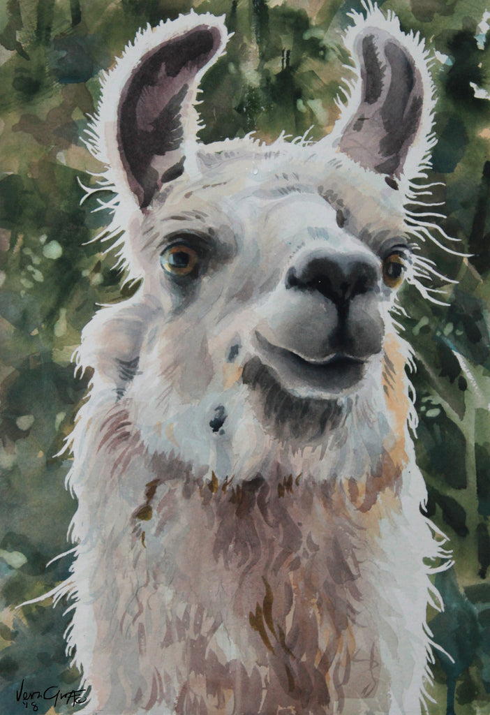 Llama Ready For Closeup