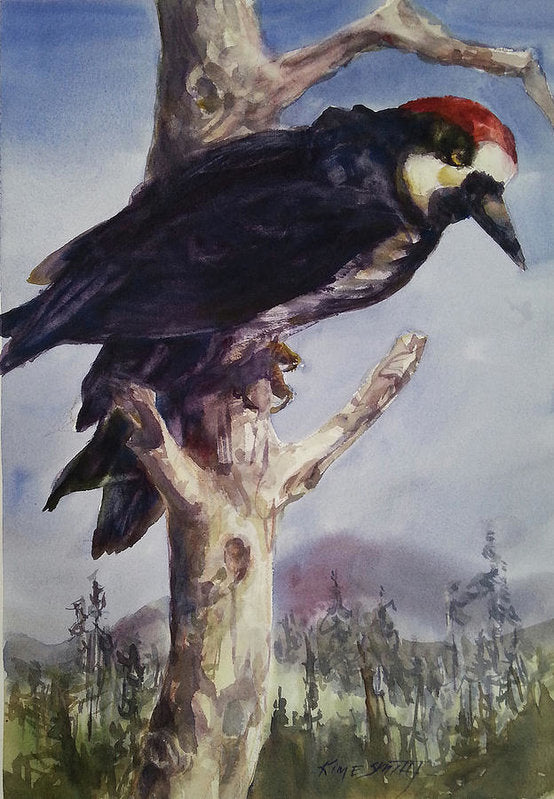 Acorn Woodpecker - Art Print