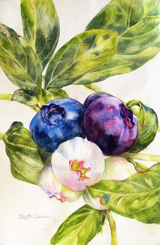 Colors Of The Berries - Art Print