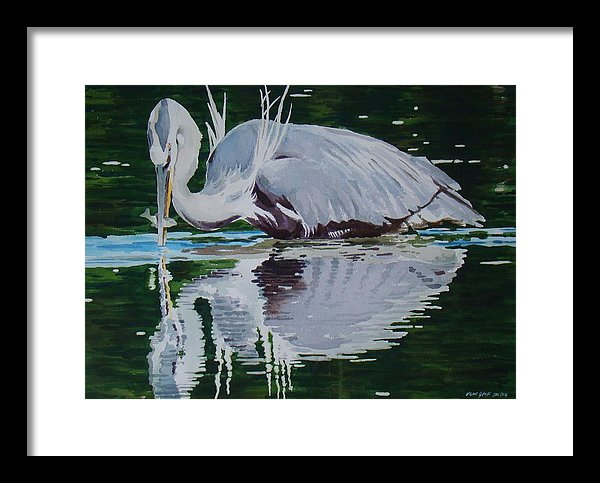 Great Blue - Framed Print