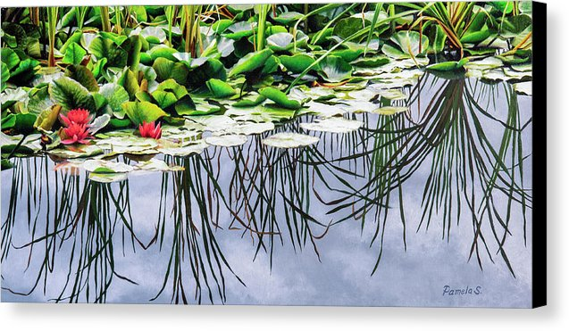 Lilly Pond - Canvas Print