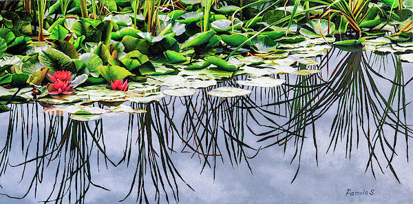 Lilly Pond - Art Print