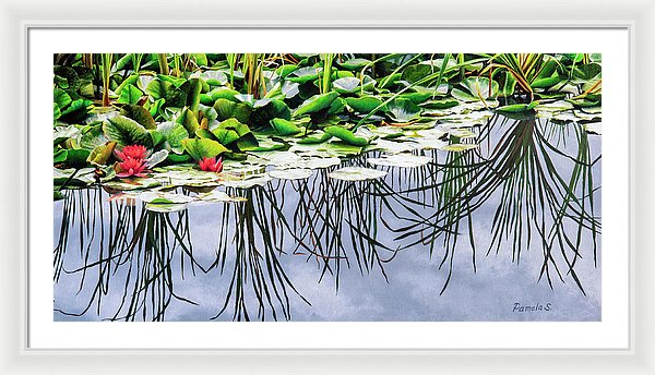 Lilly Pond - Framed Print