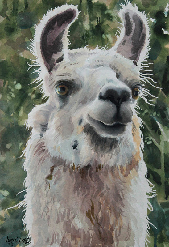 Llama Ready For Close-up - Art Print