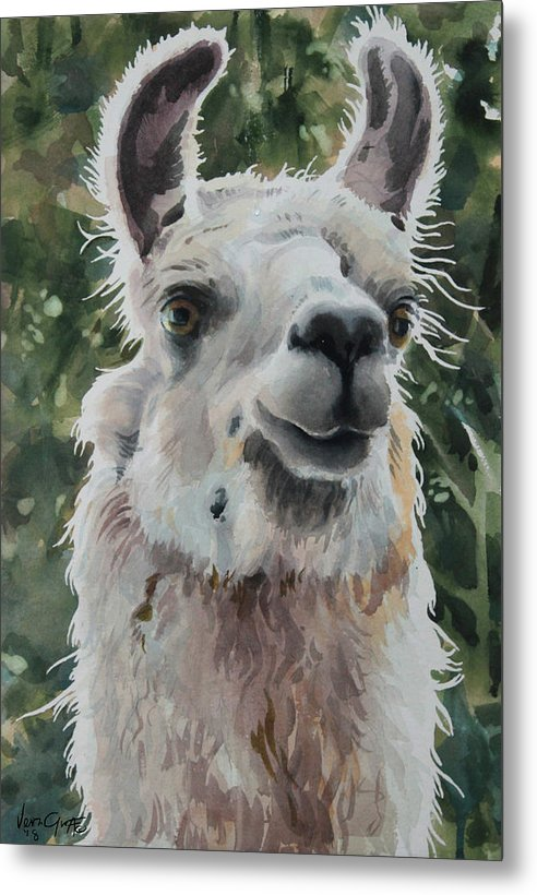 Llama Ready For Close-up - Metal Print