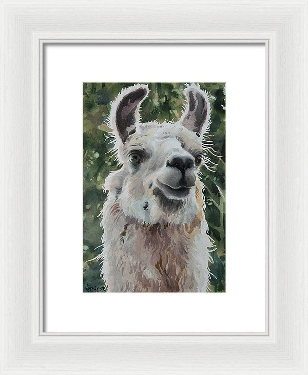 Llama Ready For Close-up - Framed Print