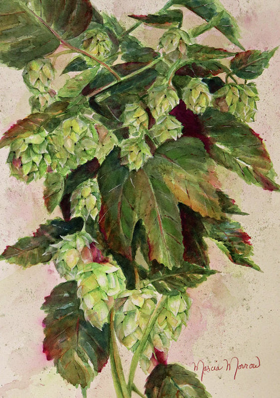 Oregon Hops - Art Print