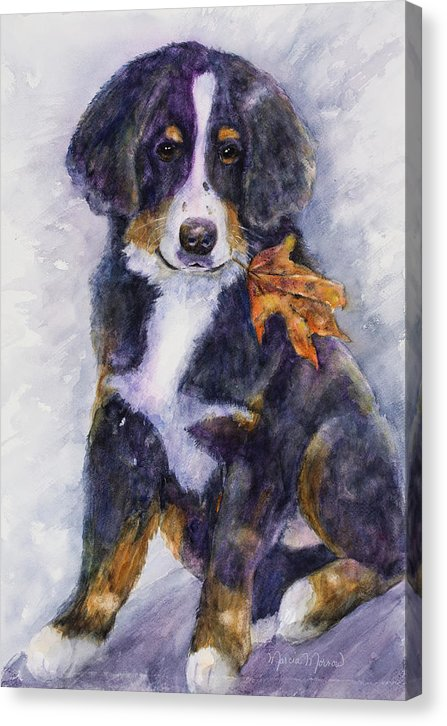 Ripley's Fall - Canvas Print