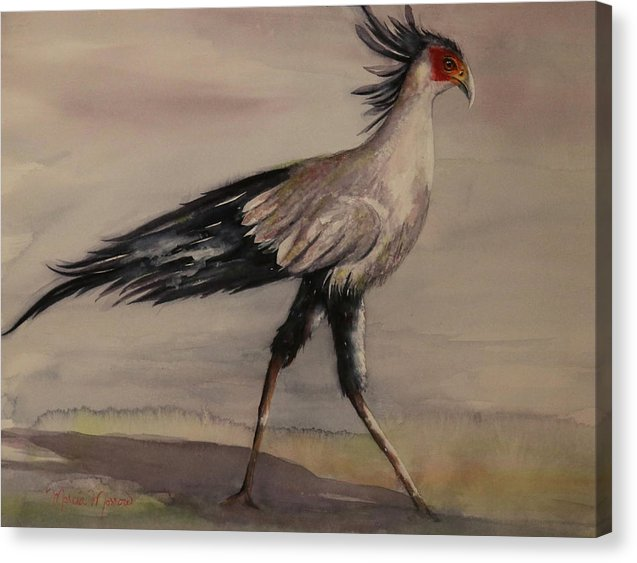 Secretary Bird - Canvas Print