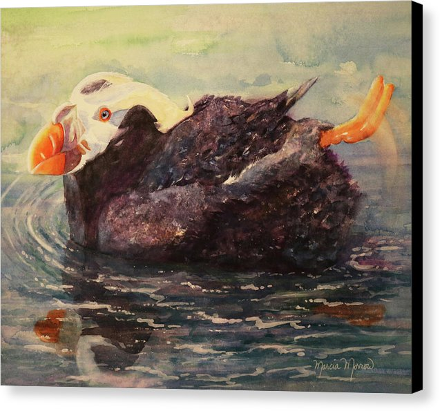 Tufted Puffin - Canvas Print
