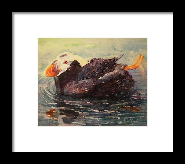 Tufted Puffin - Framed Print