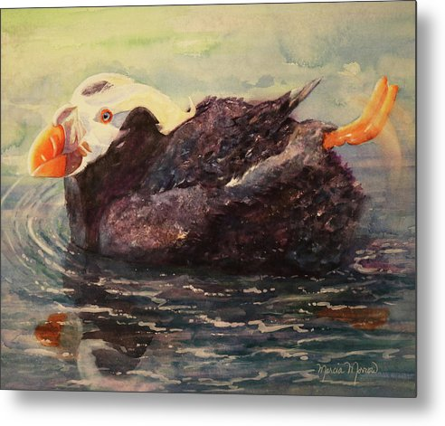 Tufted Puffin - Metal Print