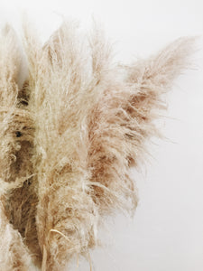 Pampas Grass - Natural
