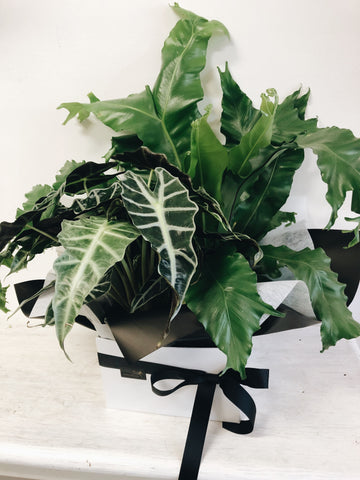 plant gift delivery Coolum Peregian Noosa Buderim