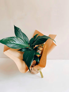 Gifted Plant | Includes Chocolates