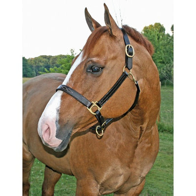 Premier Dorchester Padded Leather Halter