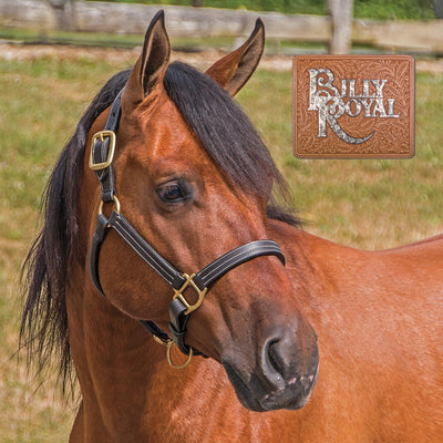 Billy Royal® Belmont Leather Halter