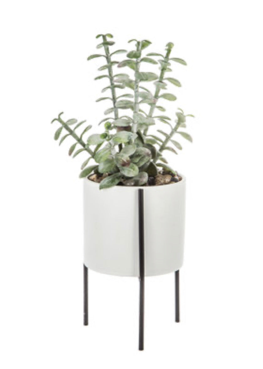 Potted Succulent With Stand