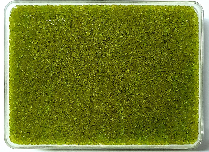 Premium Japanese Green Wasabi Tobiko (Flying Fish Roe)